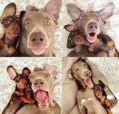 Funny dog selfies