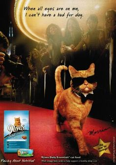 This kitty's really the cat's meow. #cats #advertising #marketing