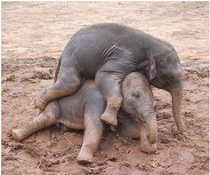 Babies, playing.  So cute!