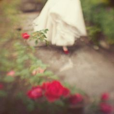 a rosy dream