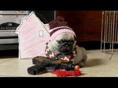 Home Alone reenacted by pugs