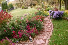 landscaping with roses | Beginner Landscaping: dax080 picture (Shrub Roses vs. Knockout Roses)