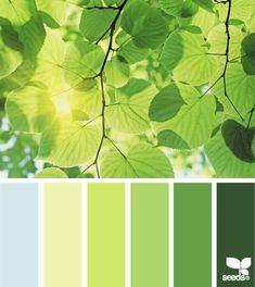 color palettes, design seeds, color schemes, green, paint colors, leaf tone, colour palettes, wall mural, leaves