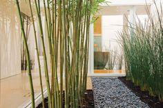 Jardin interior con piedras para poder caminar y regar