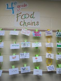 Have the students actually make a chain to glue their food chain to!