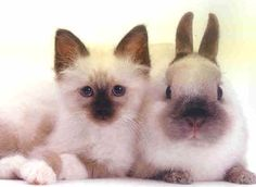 White and brown bunny and kitten