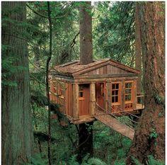 Tree House: Temple of the Blue Moon—Fall City, Washington