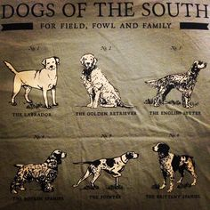 Dogs of the South