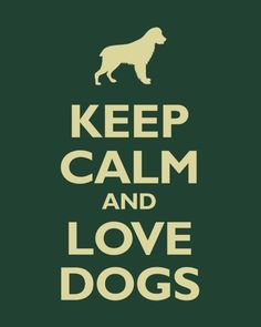 happy thoughts, cannabi, dog lovers, frog, paper, art prints, forest, keep calm, puppi