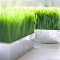 Could I grow cat grass that looks this nice?