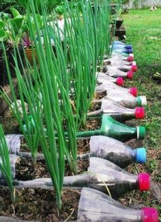 Creative uses of plastic bottles on pinterest plastic for Creative use of plastic bottles