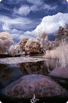 Infrared photography. Likes.