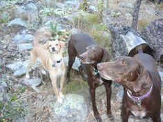 my devoted pups ... love 'em