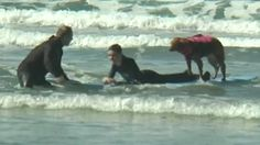 """Dog Helps Teen Cancer Patient Achieve Surfing Dream"""