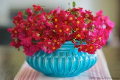 Bougainvillea and red Roses in a turquoise planter make the perfect Spanish combination