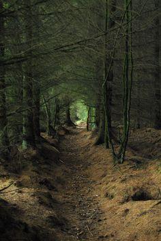 Forrest corridor -  Scotland