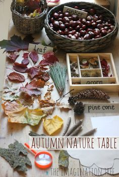 Create a nature table at home for exploring, drawing and writing about Autumn treasures!
