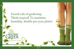 Fourth rule of gardening: Think tropical! To maximize humidity, double-pot your plants!