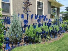 cobalt Bottle Garden, traditional Bottle Tree at the far end. With over 400 bottles/glass pieces in her garden yard, garden decorations, cobalt blue, bottle trees, bottl garden, bottl tree, wine bottles, blue bottl, glass garden