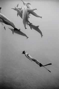 Swimming with dolphins. :)