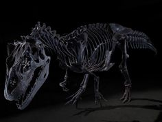 Why the Dinosaurs Could Have Had a Chance of Surviving the Asteroid Strike | Smithsonian. Credit: Eric Long, James Di Loreto, Donald E. Hurlbert, and Brittany M. Hance.