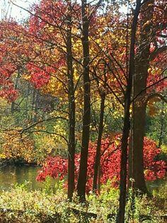 Shores of the Huron River Ann Arbor Michigan