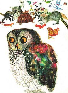 kid books, animals, vintage illustrations, 1966, brian wildsmith, vintage kids, tortoises, atlantis, owls