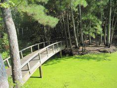 Nags Head Wood Preserve