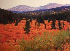 Buffalo Peaks, near Fairplay, CO. Just two more weeks ...