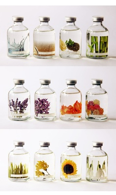 Flower in the Bottle