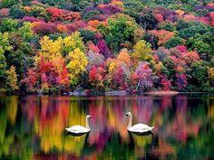 nature beauty, tree, season, color, fall autumn