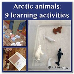 learn activ, winter activ, learn animals, winter fun, arctic animals preschool