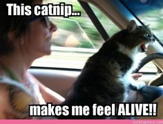 What catnip does for the self-esteem