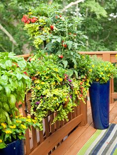 cherry tomatoes grown on deck among flowers