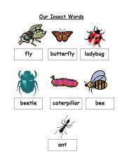 FREE printable insect word wall via www.pre-kpages.com