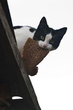 #cats Just feeding the birds.