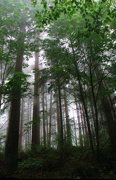 Misty Trees Stitch by P Swortz