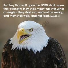 Eagle Scout Quotes and Sayings | But they that wait upon the LORD shall renew their strength; they ...