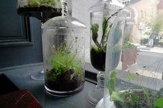 How to make a terrarium.  I've always wanted to know how to do this!