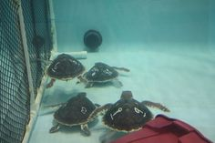 Sea turtles at the New England Aquarium