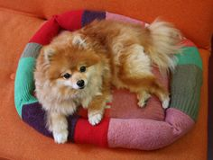 Make a pet bed out of old sweaters! >> http://blog.diynetwork.com/maderemade/how-to/upcycle-old-sweaters-into-a-pet-friendly-bed/?soc=pinterest