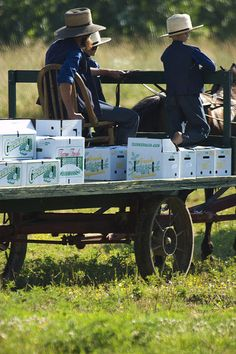fresh picked, Amish vegetables, Ohio
