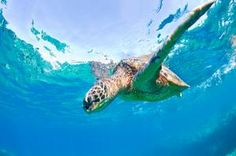 TripBucket - We want You to DREAM BIG! | Blog | Treasuring Turtles