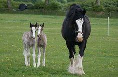 Rare Twin Horses