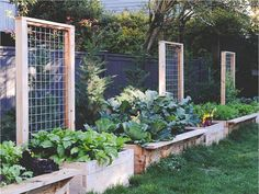 "For today I have a great article for you that I called ""15 Creative And Easy DIY Trellis Ideas For Your Garden"". A garden trellis is an excellent way"