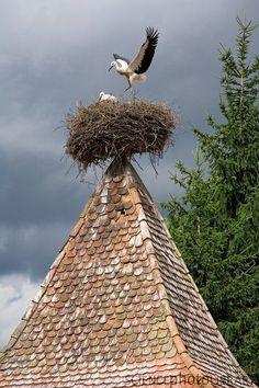 Stork Nest Archita, Romania.