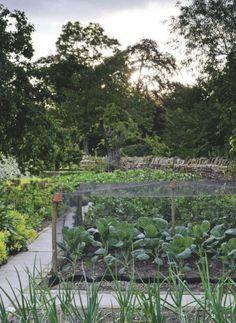 Oxfordshire veg patch | jardin potager