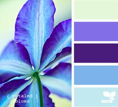 petaled blues