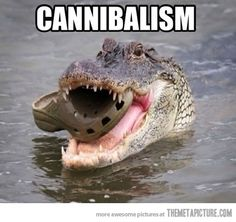 Google Image Result for http://themetapicture.com/media/funny-crocodile-eating-croc-shoe.jpg
