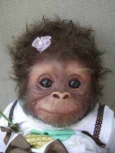 MONKEYYY!!! anim, monkeys, pet, funni, cuti, ador, smile, thing, babi monkey